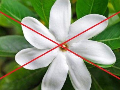 Voici cinq fleurs de bash, des fleurs de LACURE OFFICINE autres que l'ordinaire.